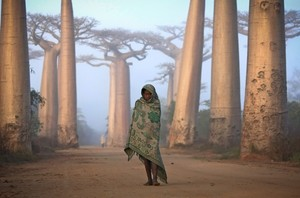 """An Ancient Forest"", Ken Thorne, Madagascar - National Geographic Traveler - Photo Contest 2012"